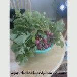 How radishes helped me get my groove back…