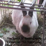 Guest Blog- The Basics of Raising Meat Rabbits on the Homestead, Part 2