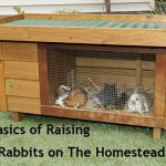 Guest Blog- The Basics of Raising Meat Rabbits on the Homestead, Part 1