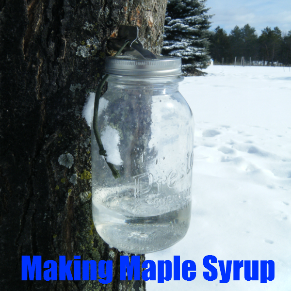 Today we have a Guest Post on Making Maple Syrup. It is by Cody Deuel ...