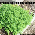 Oregano For The Home Gardener