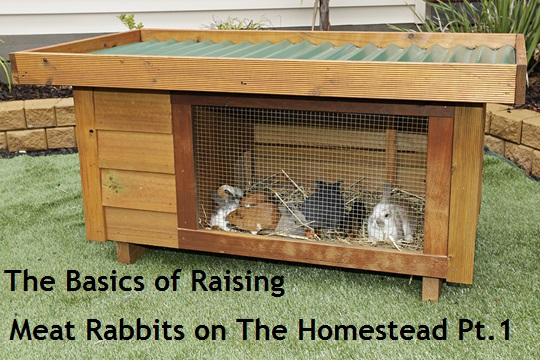 Guest Post by Rick of Rise and Shine Rabbitry - Part 1
