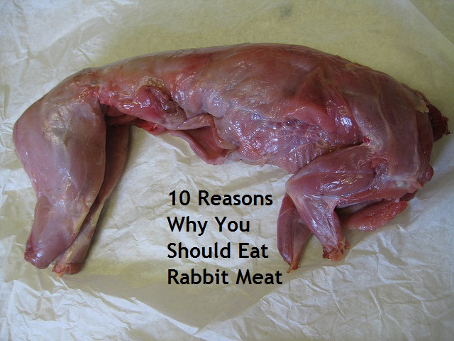 10 Reasons Why You Should Eat Rabbit Meat